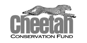 Openbox9 Clients: Cheetah Conservation Fund